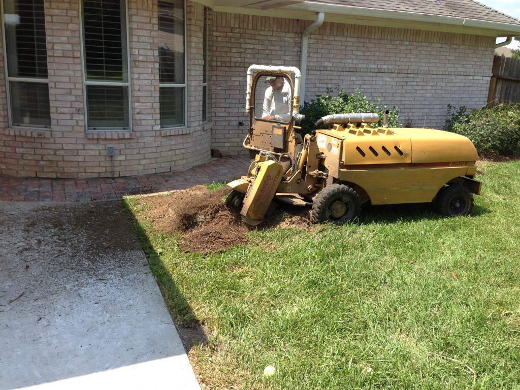 Stump grinding near house